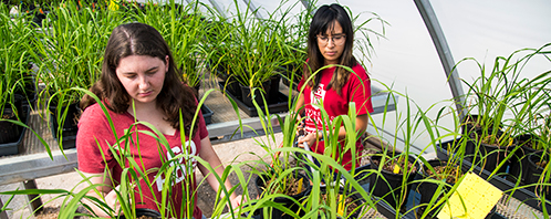 Student and Clemencia Rojas, faculty member, conducting research in the greenhouse.